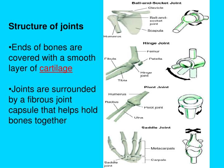 Structure of joints