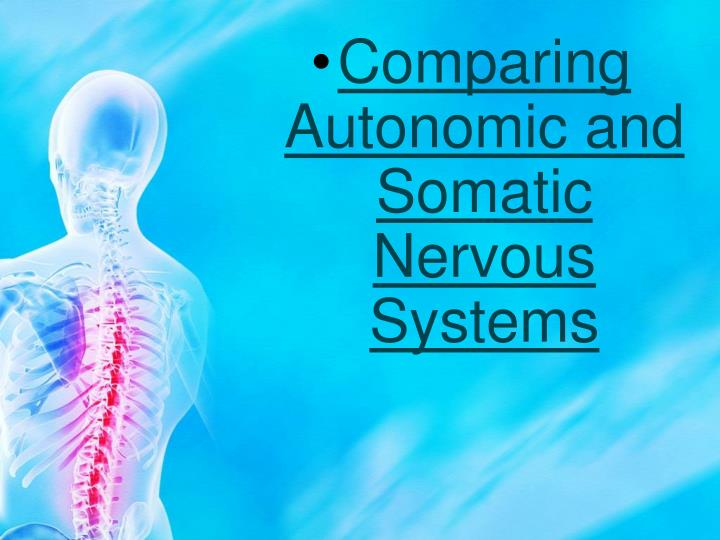 Comparing Autonomic and Somatic Nervous Systems