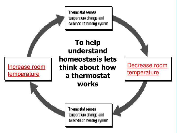 To help understand homeostasis lets think about how a thermostat works