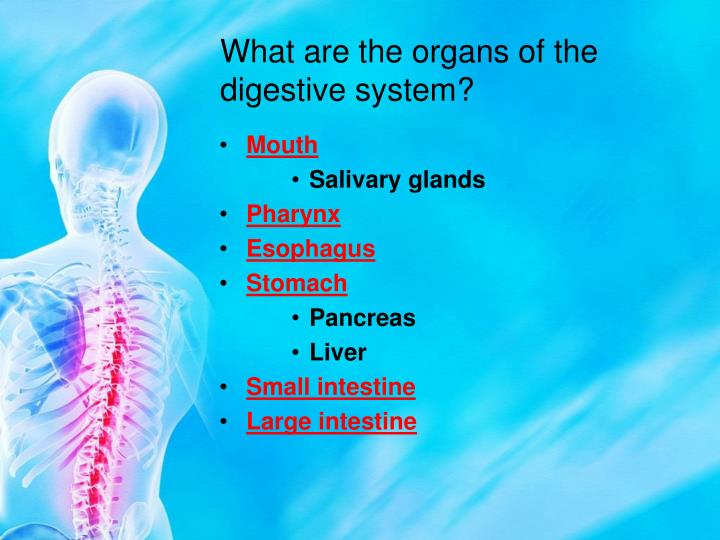 What are the organs of the digestive system?