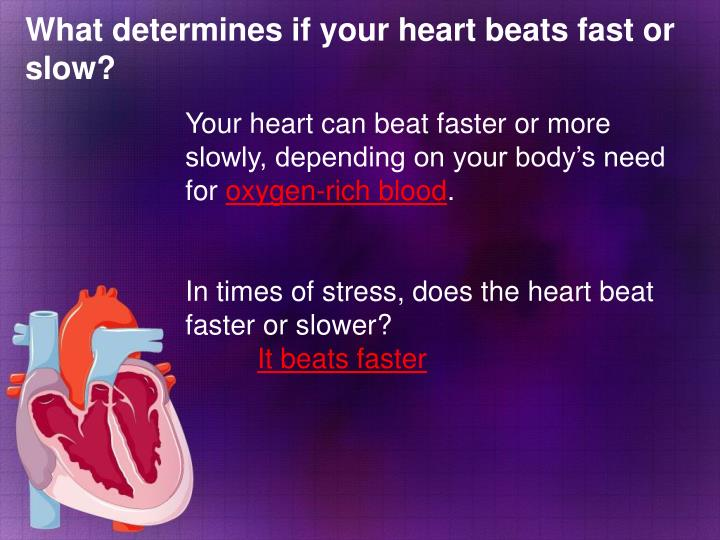 What determines if your heart beats fast or slow?