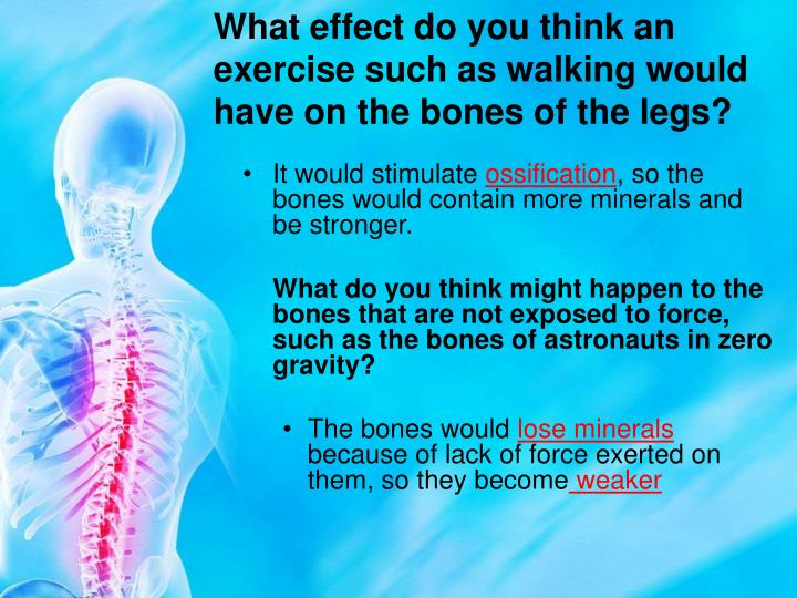 What effect do you think an exercise such as walking would have on the bones of the legs?