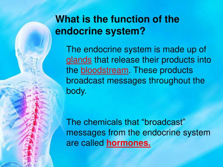 What is the function of the endocrine system?