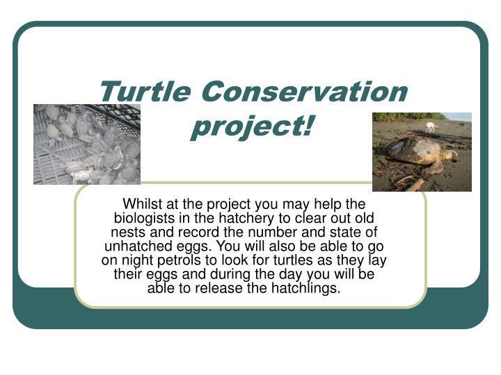 Turtle Conservation project!