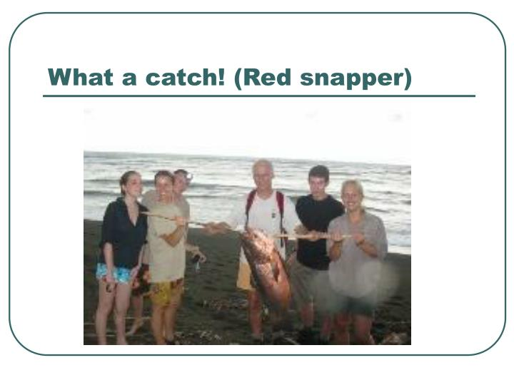 What a catch! (Red snapper)