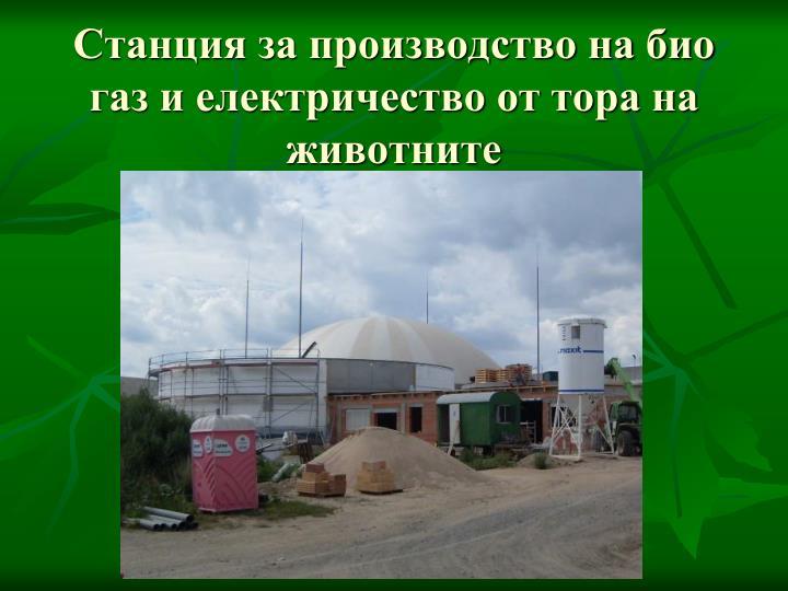 Станция за производство на био газ и електричество от тора на животните