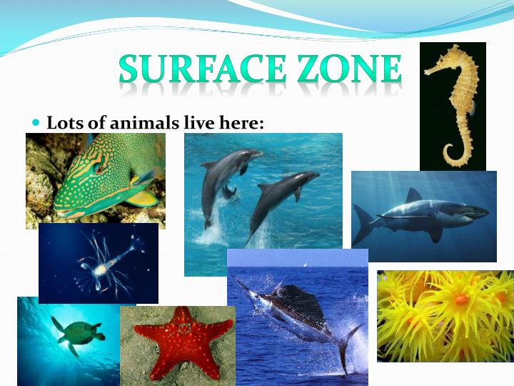 Surface Zone