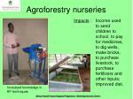 agroforestry nurseries