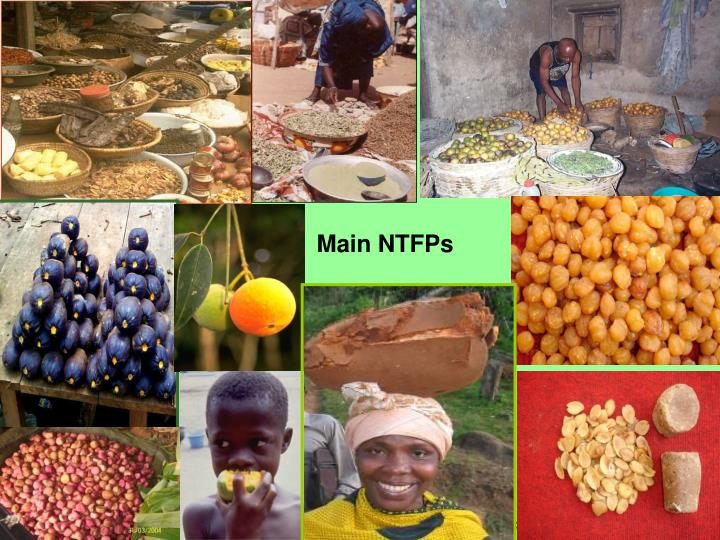Main NTFPs