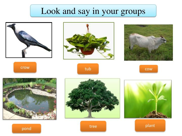 Look and say in your groups