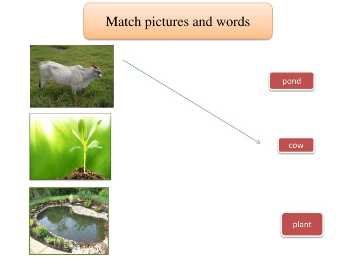 Match pictures and words