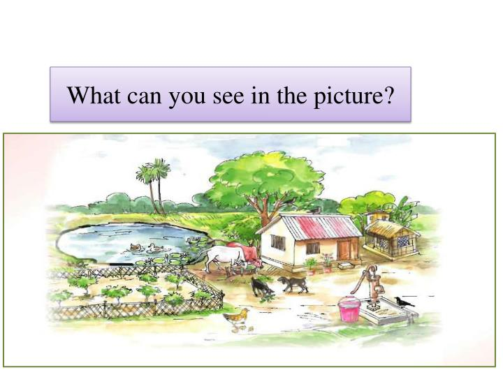 What can you see in the picture?