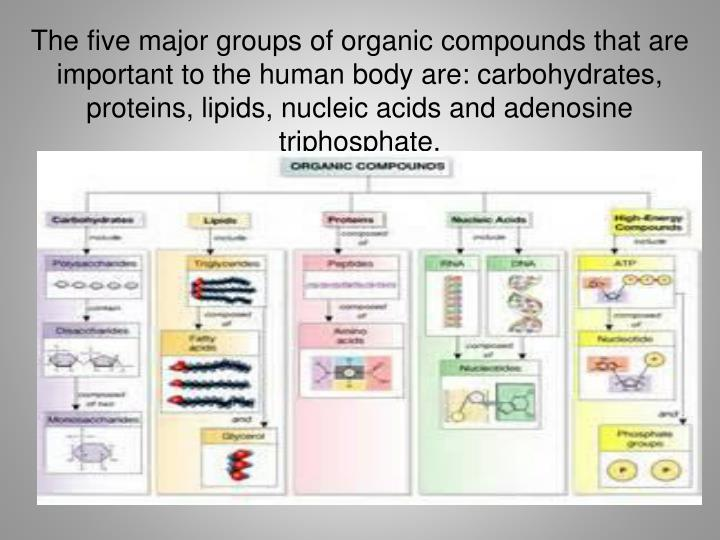 The five major groups of organic compounds that are important to the human body are: carbohydrates, proteins, lipids, nucleic acids and adenosine triphosphate.
