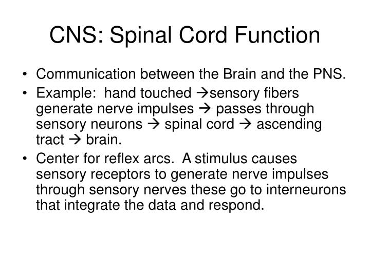 Cns spinal cord function