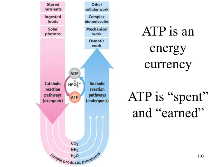 ATP is an energy currency