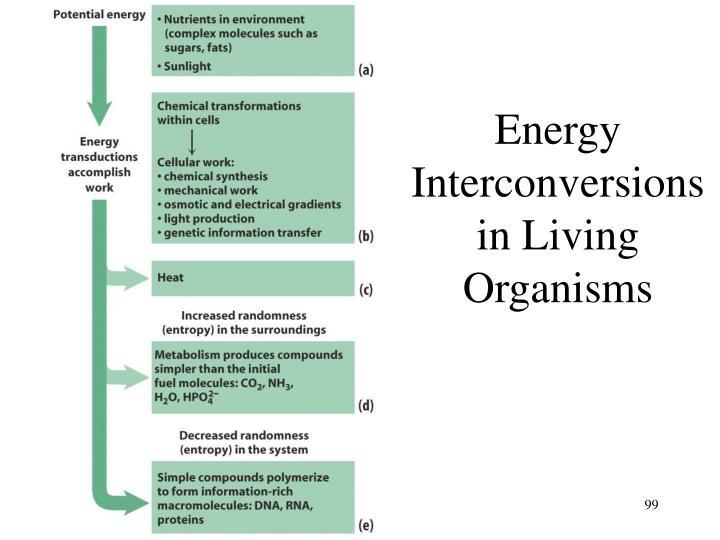 Energy Interconversions in Living Organisms