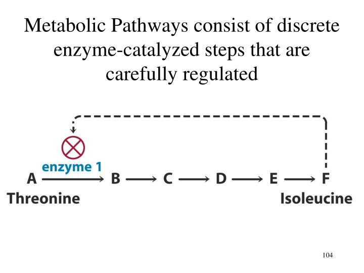 Metabolic Pathways consist of discrete enzyme-catalyzed steps that are carefully regulated