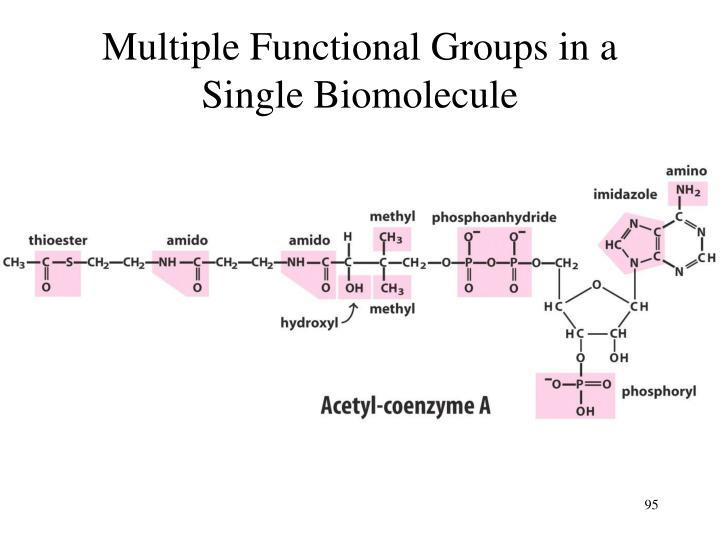 Multiple Functional Groups in a Single Biomolecule