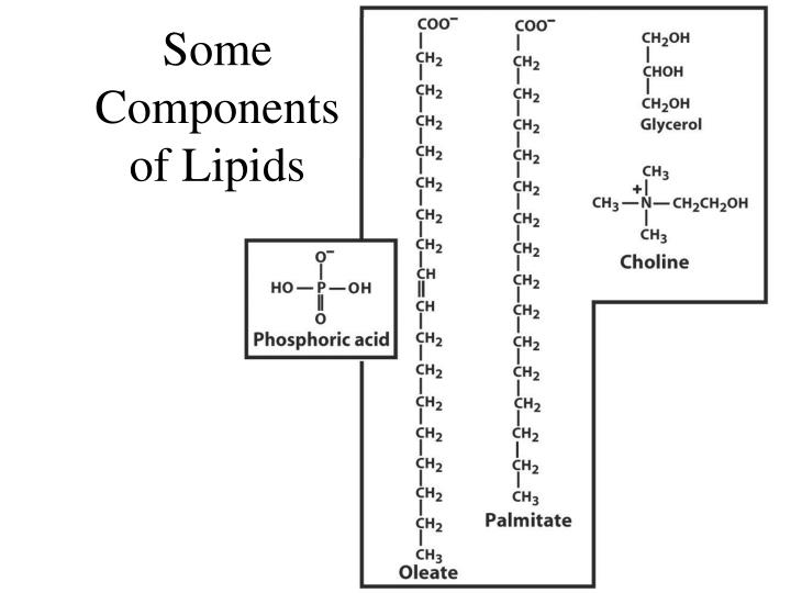 Some Components of Lipids