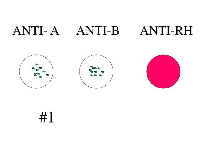 ANTI- AANTI-BANTI-RH