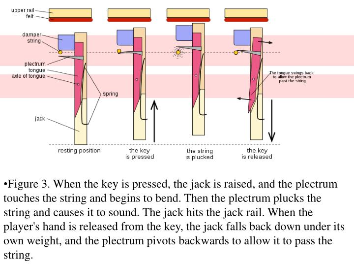 Figure 3. When the key is pressed, the jack is raised, and the plectrum touches the string and begins to bend. Then the plectrum plucks the string and causes it to sound. The jack hits the jack rail. When the player's hand is released from the key, the jack falls back down under its own weight, and the plectrum pivots backwards to allow it to pass the string.