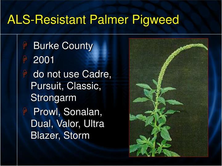 ALS-Resistant Palmer Pigweed