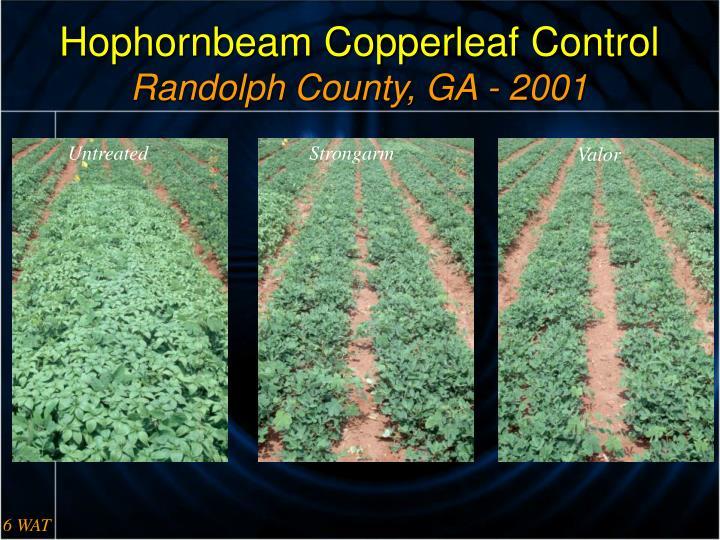 Hophornbeam Copperleaf Control