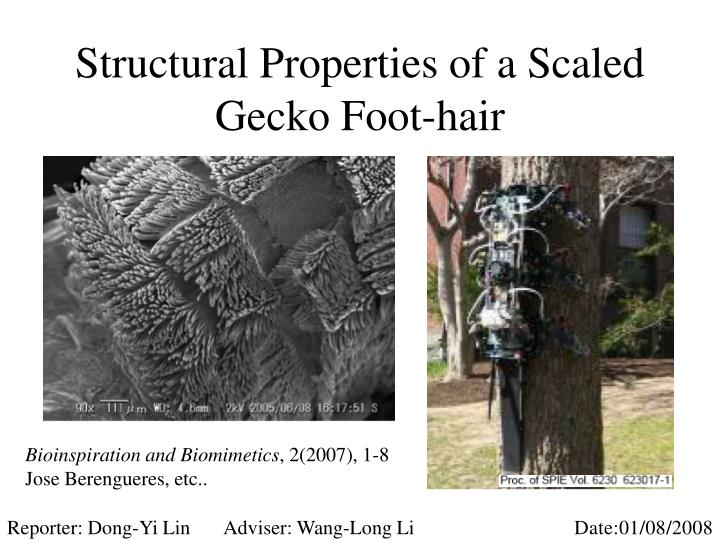 Structural properties of a scaled gecko foot hair