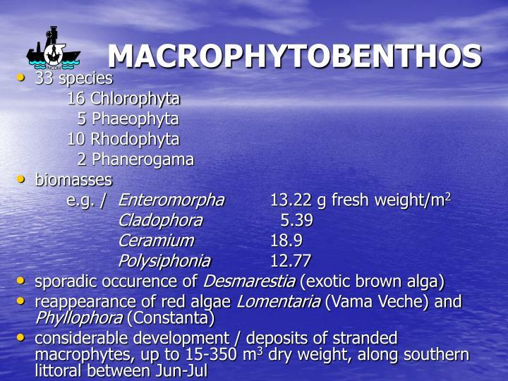 MACROPHYTOBENTHOS