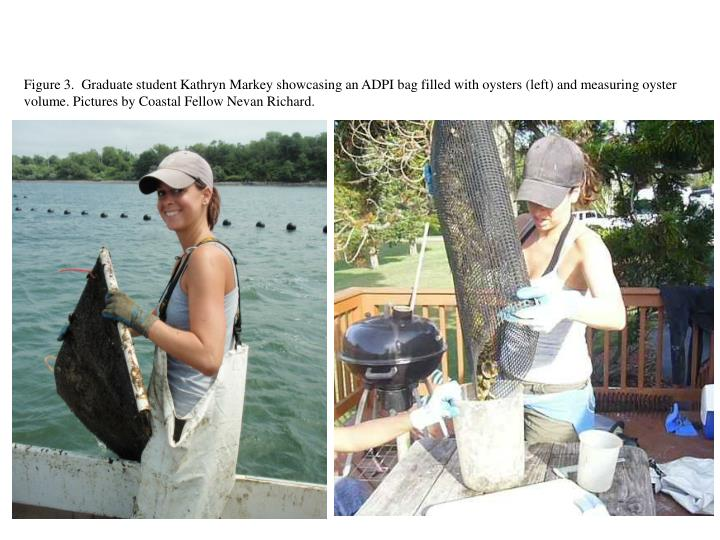 Figure 3.  Graduate student Kathryn Markey showcasing an ADPI bag filled with oysters (left) and measuring oyster volume. Pictures by Coastal Fellow Nevan Richard.