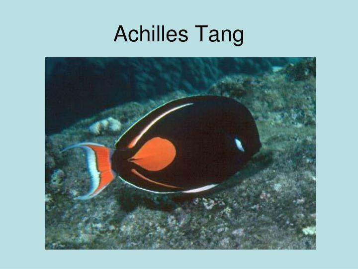 Achilles Tang