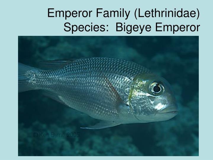 Emperor Family (Lethrinidae)