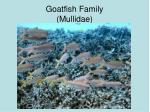 goatfish family mullidae