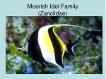 moorish idol family zanclidae