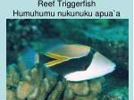 reef triggerfish humuhumu nukunuku apua a
