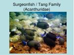 surgeonfish tang family acanthuridae