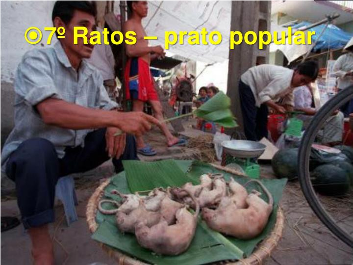 7º Ratos – prato popular