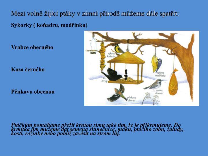 Mezi volně žijící ptáky v zimní přírodě můžeme dále spatřit: