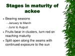 stages in maturity of ackee