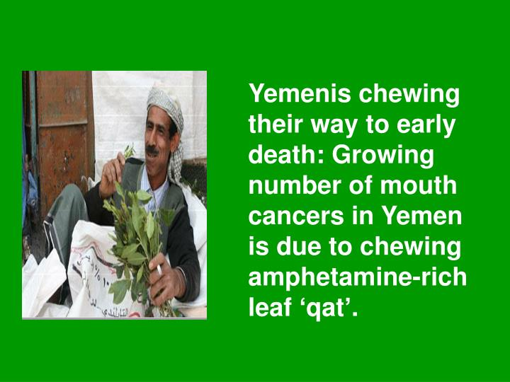 Yemenis chewing their way to early death: Growing number of mouth cancers in Yemen is due to chewing amphetamine-rich leaf 'qat'.