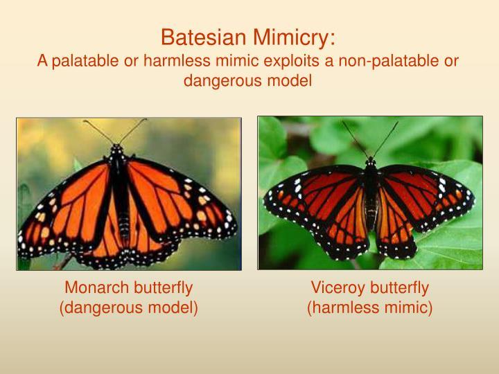 Batesian Mimicry: