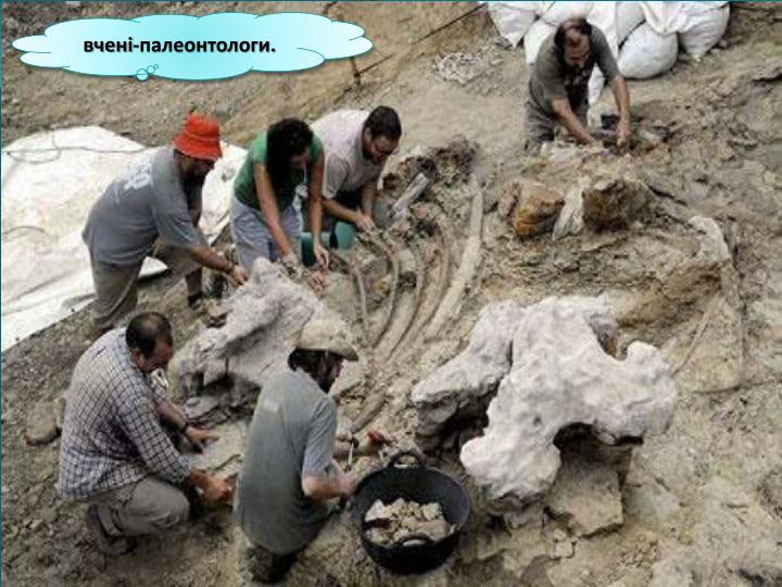 вчені-палеонтологи
