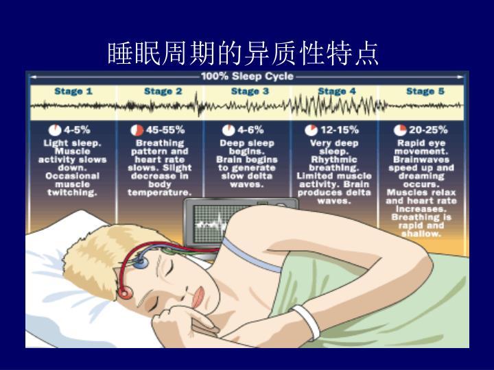 睡眠周期的异质性特点