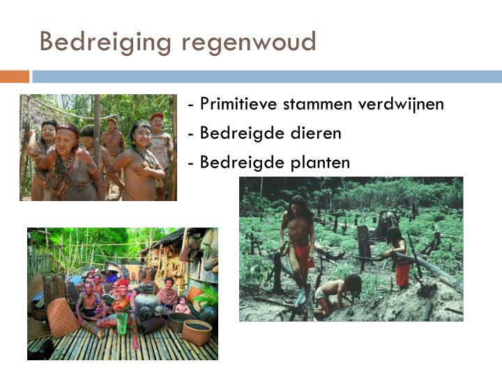 Bedreiging regenwoud