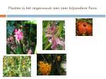 planten in het regenwoud een zeer bijzondere flora