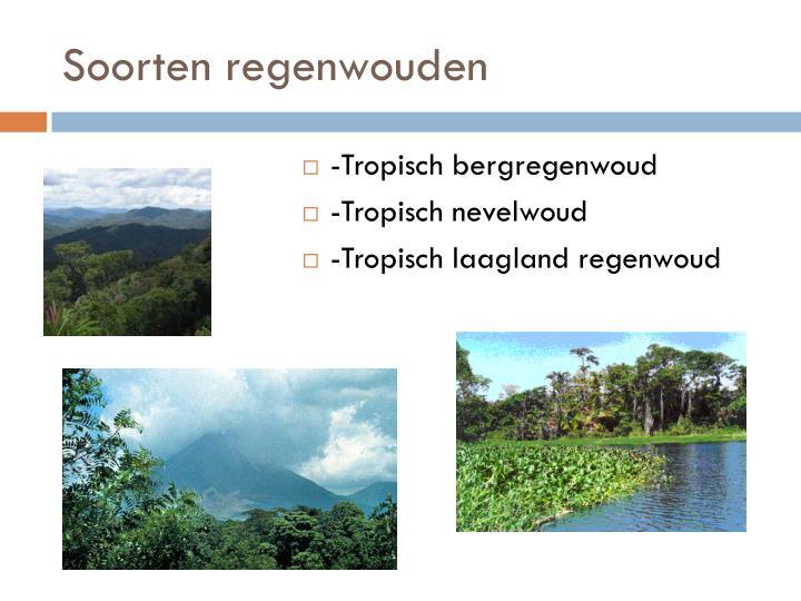 Soorten regenwouden