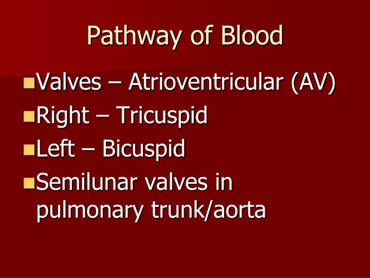 Pathway of Blood