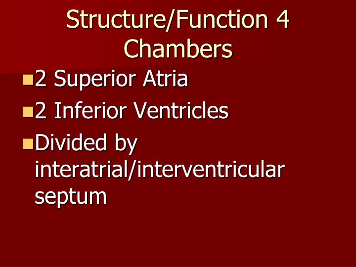 Structure/Function 4 Chambers