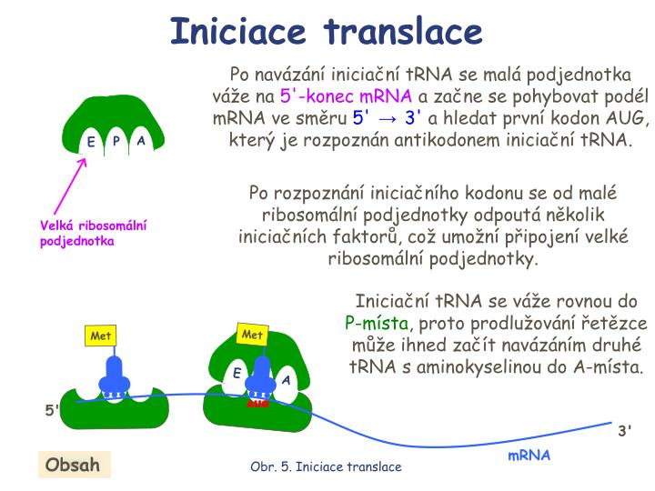 Iniciace translace
