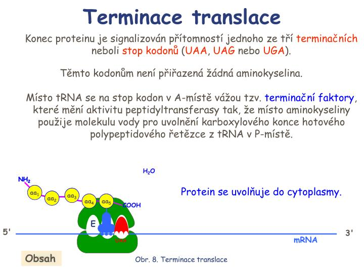 Terminace translace